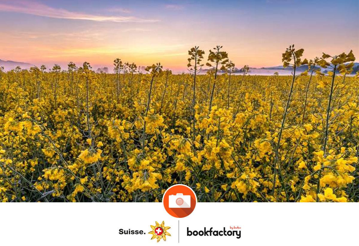 Fotowettbewerb Frühling – Die Gewinner